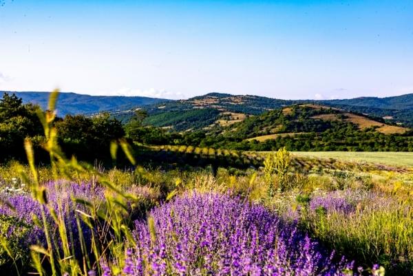 Exposition: La Provence