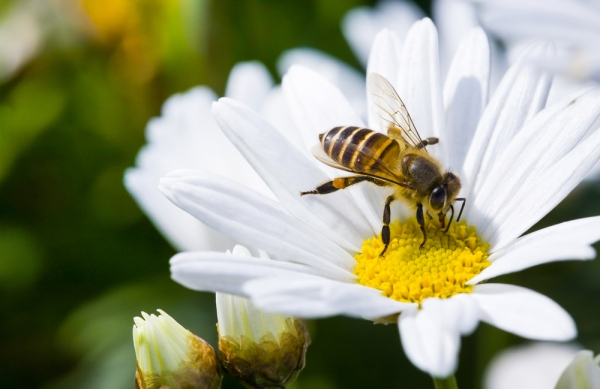 Exposition : les abeilles